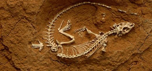 fotos de fosiles de dinosaurios
