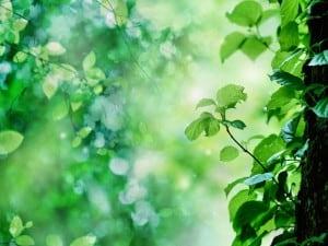 respiracion celular plantas