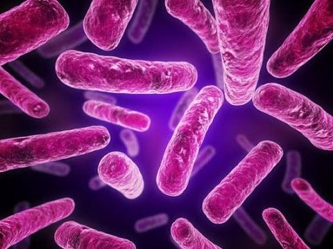 bacterias gram-negativas