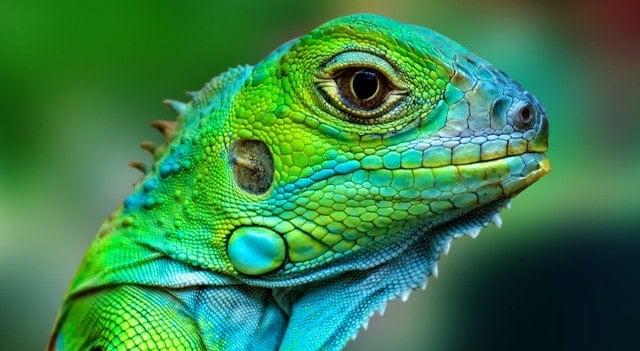 reptil y lagarto